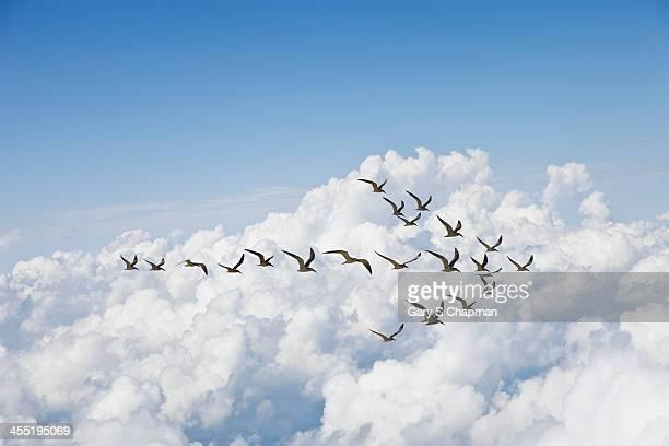 Flock of birds in shape of arrow