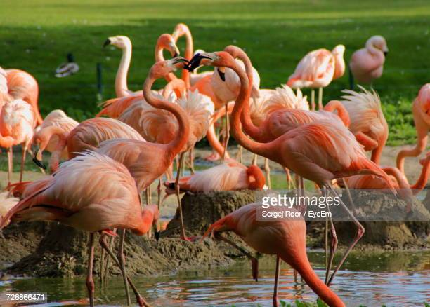 flock of birds in water - berlin zoo stock pictures, royalty-free photos & images