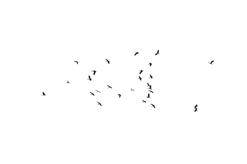 Flock of birds on a white background. For design. Flock of birds isolated on a white background. Clipping path. 905964178