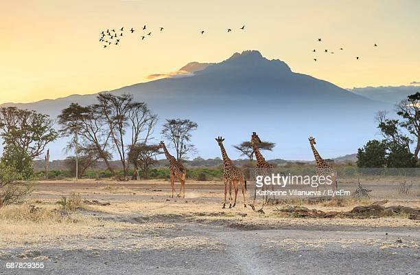 flock of birds on landscape against sky - savannah stock pictures, royalty-free photos & images