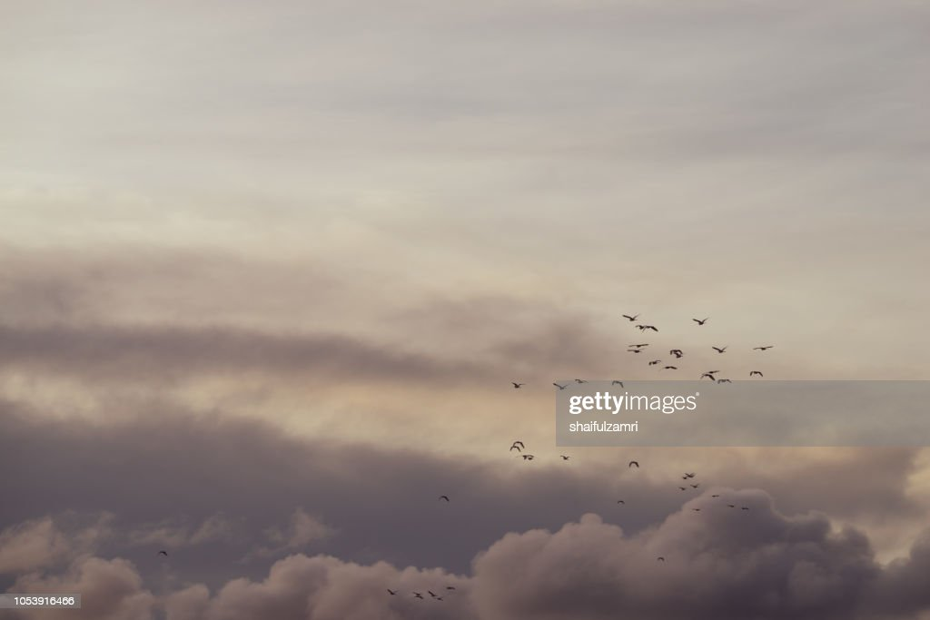 Flock of birds over cloudy monsoon sky going to fly away in warm edges. : Stock Photo
