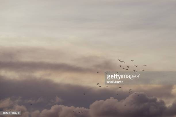 Flock of birds over cloudy monsoon sky going to fly away in warm edges.
