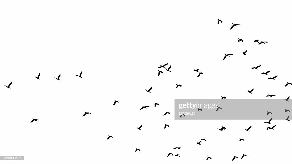 Flock of birds : Stockfoto