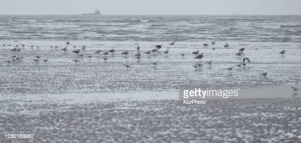 Flock of birds seen on Sandymount Strand, in Dublin. On Thursday, December 17 in Dublin, Ireland.