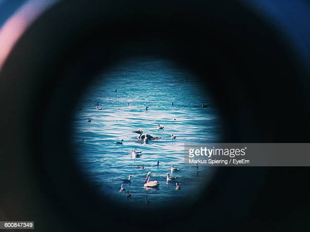 Flock Of Birds Swimming In Sea Seen Through Binocular
