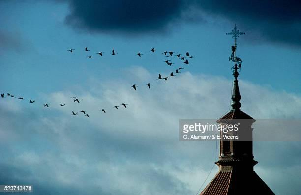 flock of cranes flying past church spire - alamany fotografías e imágenes de stock