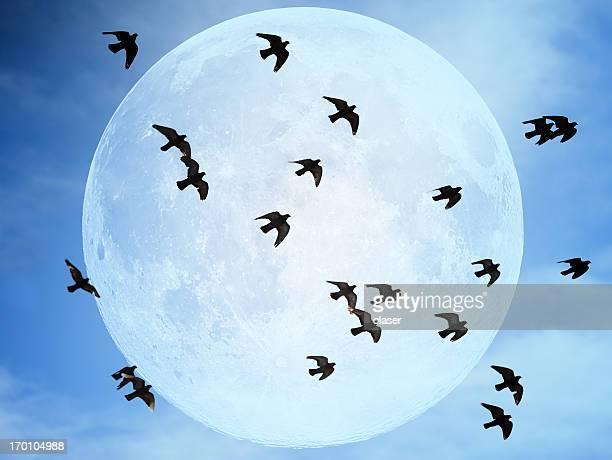 Flock of doves against moon