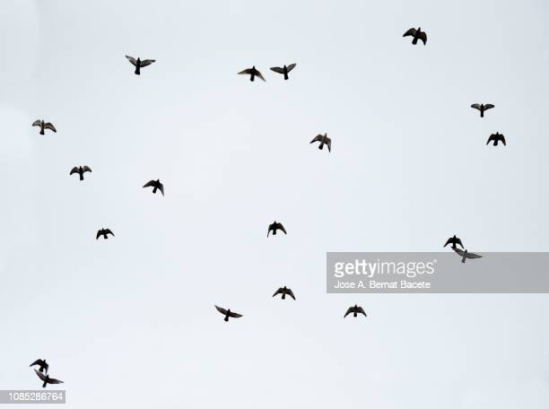 a flock of doves against the blue sky. - pájaro fotografías e imágenes de stock