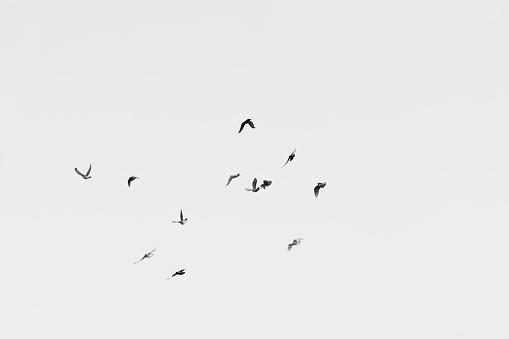 Flock of doves over white sky background 900669260
