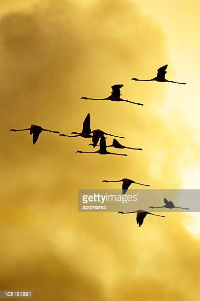 Flock of Flamingos Flying in Formation on Yellow Sky