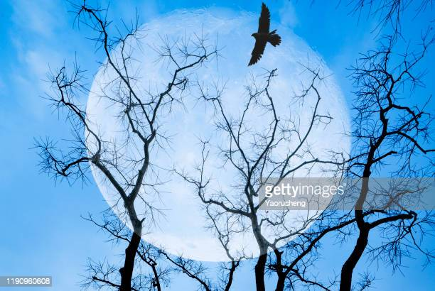 flock of flying birds on tree branch over the full moon night - dead crow stock pictures, royalty-free photos & images