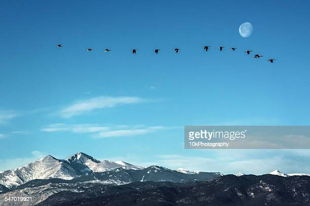 Flock of geese flying in front of the moon  over peaks of the Rocky Mountains, Colorado