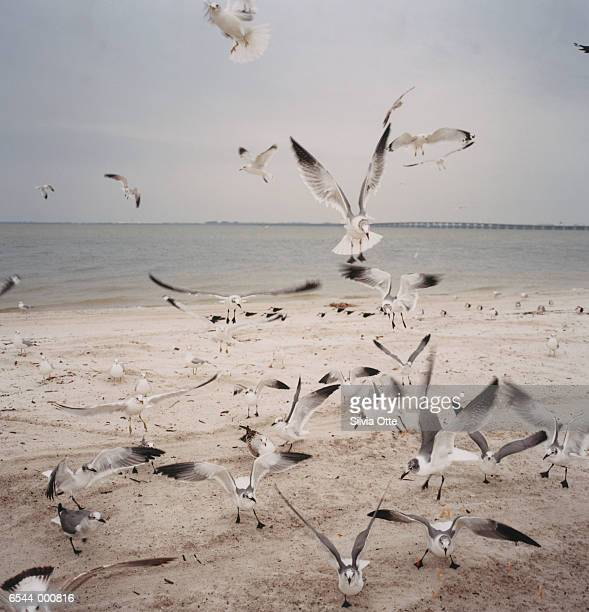 Flock of Gulls on Beach