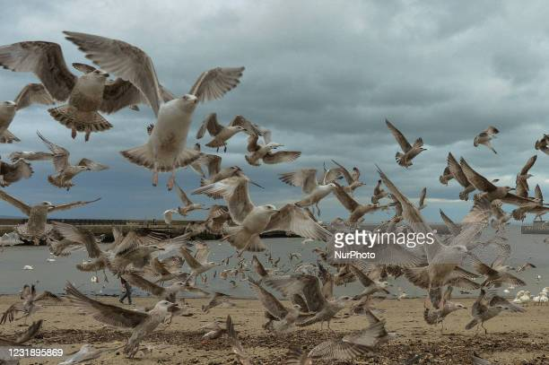 Flock of hungry segulls seen in Bray Harbor during Level Five COVID-19 lockdown. On Tuesday, March 23 in Bray, County Wicklow, Ireland.