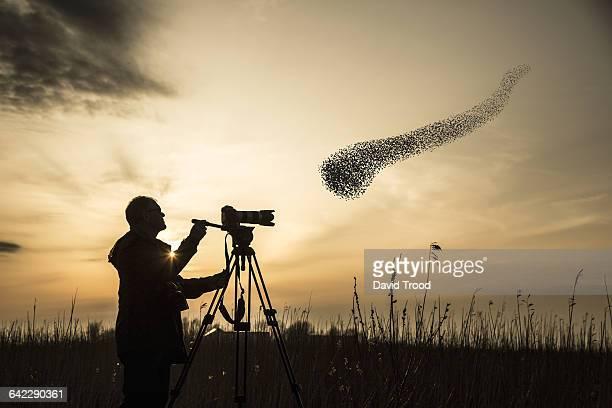 Flock of migrating starlings.