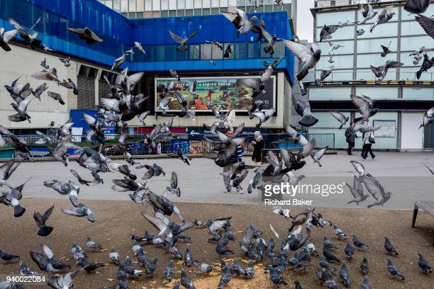 A flock of nervous pigeons takeoff enmasse in front of Elephant and Castle shopping centre on 29th March 2018 in London England