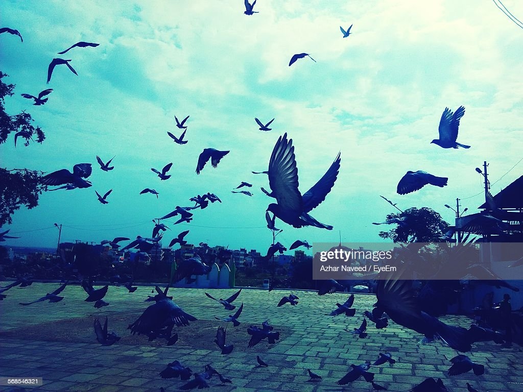 Flock Of Pigeons Against Sky : Stock Photo