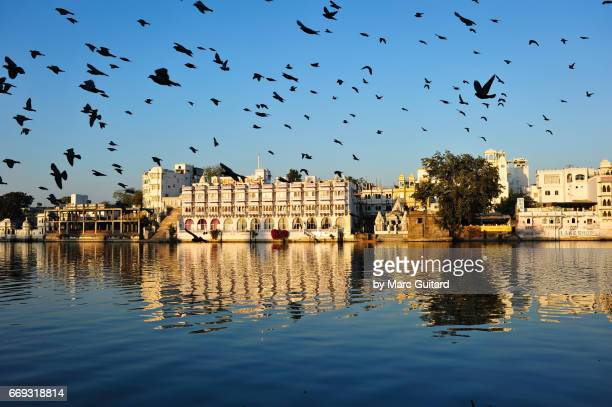 A flock of pigeons flying in front of historic buildings reflected in Lake Pichola, Udaipur, Rajasthan, India