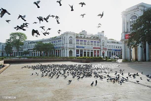 Flock of pigeons in a market, Connaught Place, New Delhi, Delhi, India