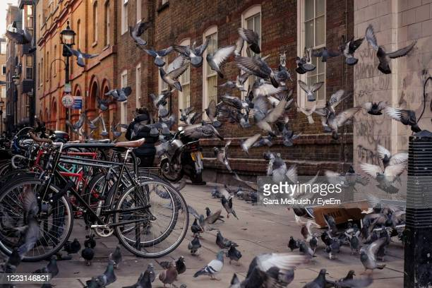 flock of pigeons in alleyway - pigeon stock pictures, royalty-free photos & images