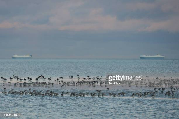Flock of sea birds seen on Sandymount Strand in Dublin, during Level 5 Covid-19 lockdown. The Department of Health reported this evening a new daily...
