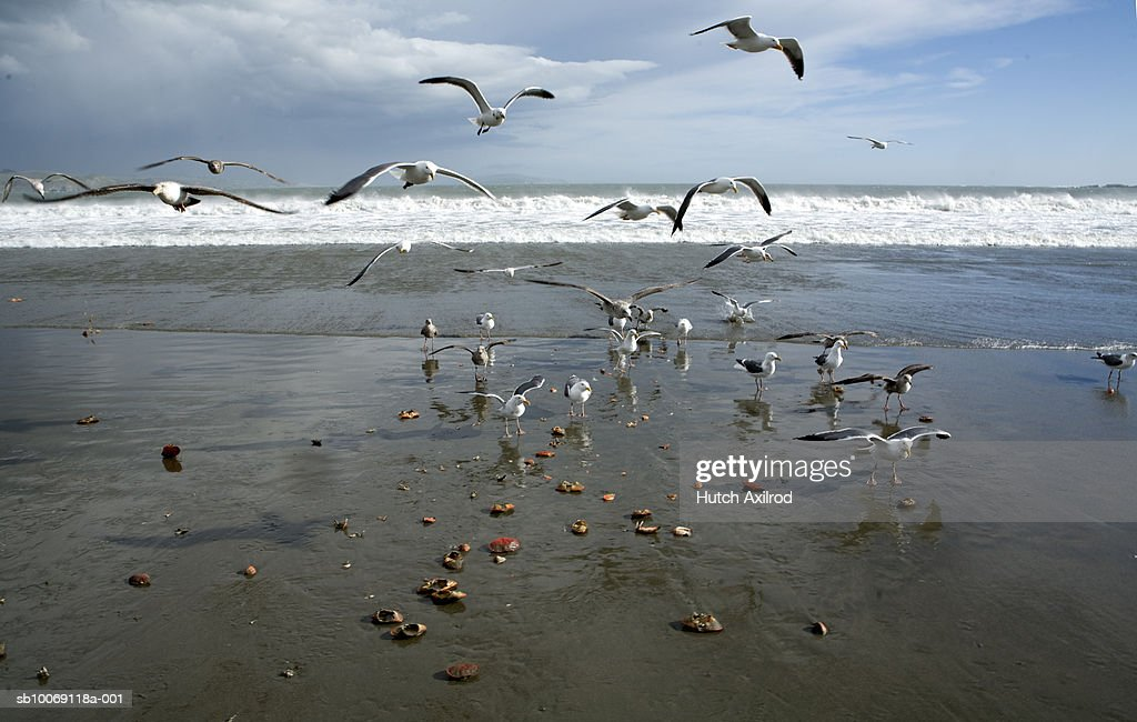 Flock of sea gulls on beach : Stockfoto