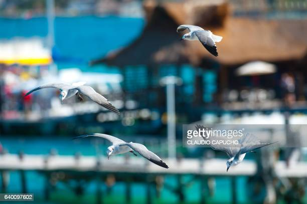 flock of seagull - claudio capucho stock pictures, royalty-free photos & images
