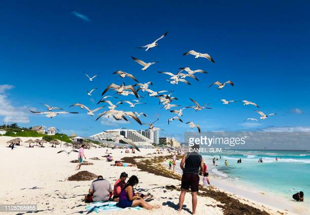 A flock of seagulls flies over beachgoers in the seaside tourist resort of Cancun in Quintana Roo state Mexico on February 16 2019 Playa del Carmen...