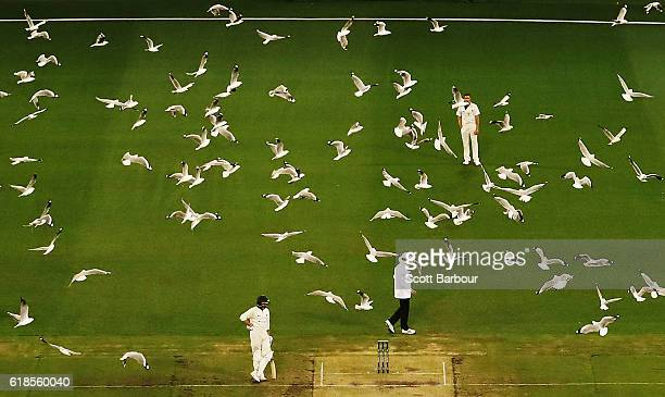 A flock of seagulls fly past as Chris Tremain of Victoria prepares to bowl during day three of the Sheffield Shield match between Victoria and...