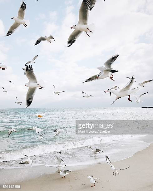 Flock Of Seagulls Flying At Seaside Against Sky