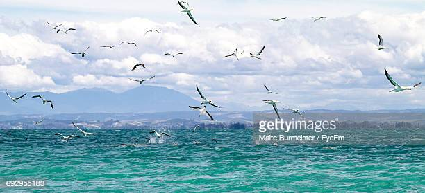 Flock Of Seagulls Flying Over Sea Against Cloudy Sky