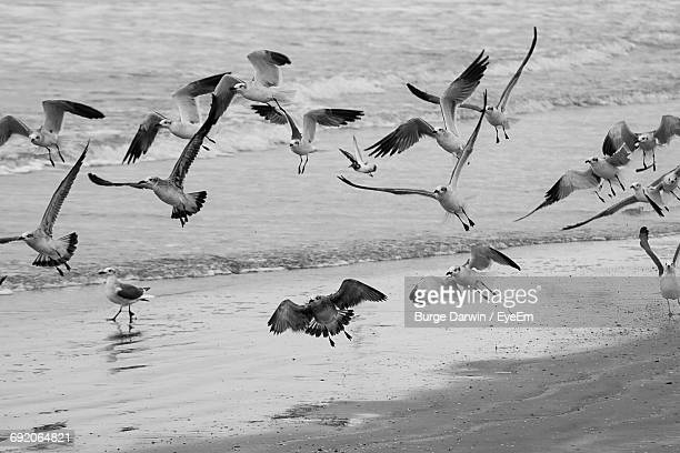 Flock Of Seagulls Flying Over Seashore