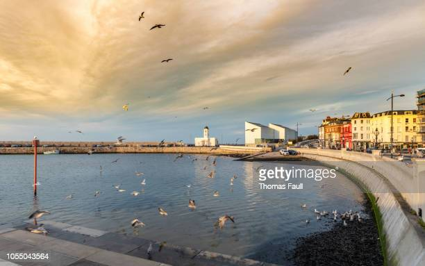 flock of seagulls in margate harbour - kent county stock pictures, royalty-free photos & images