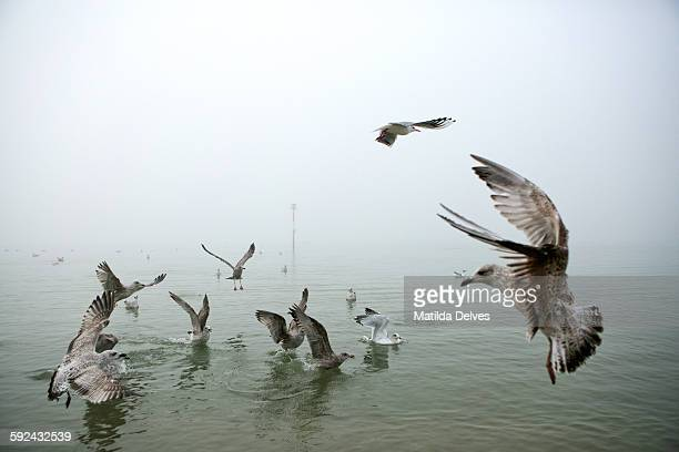 A flock of seagulls in sea water on a foggy day