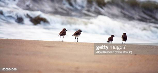 Flock of seagulls looking at the beach