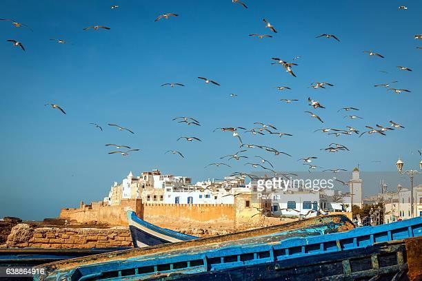 Troupeau de mouettes sur le village de pêcheurs Essaouira, Maroc, Afrique
