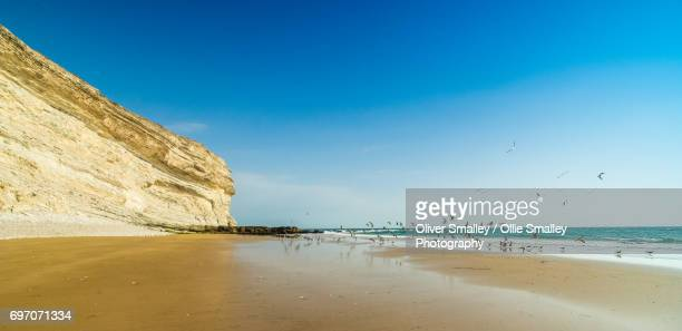 flock of seagulls taking flight on the moroccan coast - near agadir, west morocco - agadir stock pictures, royalty-free photos & images