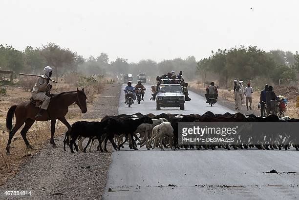 A flock of sheep cross a road in a suburb of N'Djamena on March 28 2015 AFP PHOTO / PHILIPPE DESMAZES