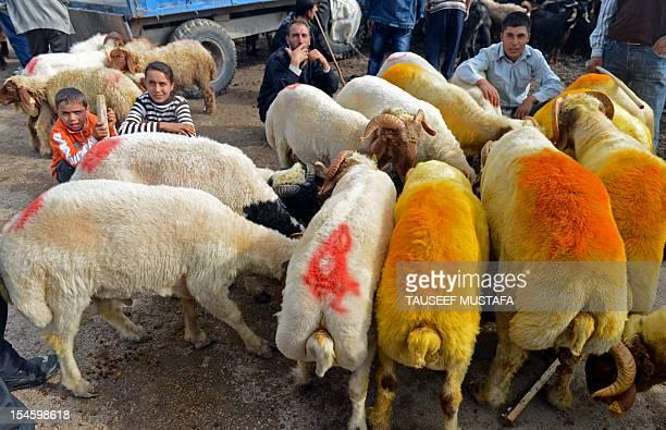 Flock of sheep feeds at an animal market in the southern Turkish city of Kilis on October 23 ahead of the Muslim feast of Eid al-Adha. Eid al-Adha is...