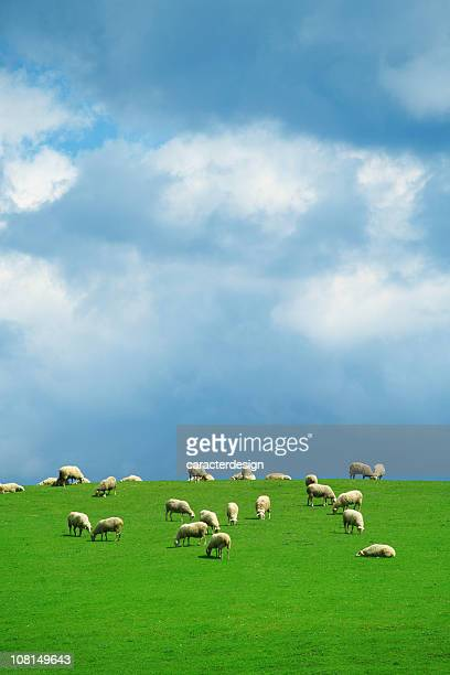 Flock of Sheep on Green Pasture with Blue Cloudy Sky