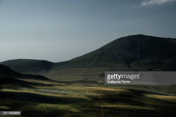 flock of sheep on the volcanoes - auvergne stock pictures, royalty-free photos & images