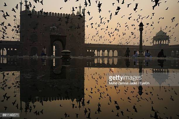 Flock Of Silhouette Birds Flying Over Pond At Jama Masjid During Sunrise