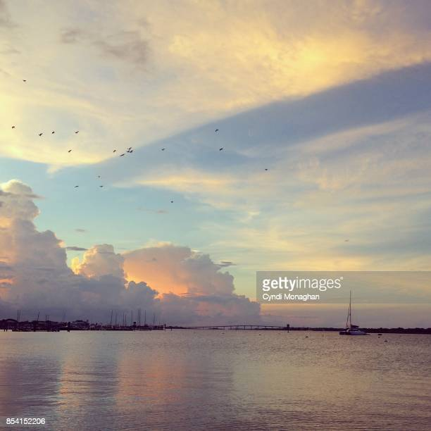 Flock of Snowy Egrets at Sunset