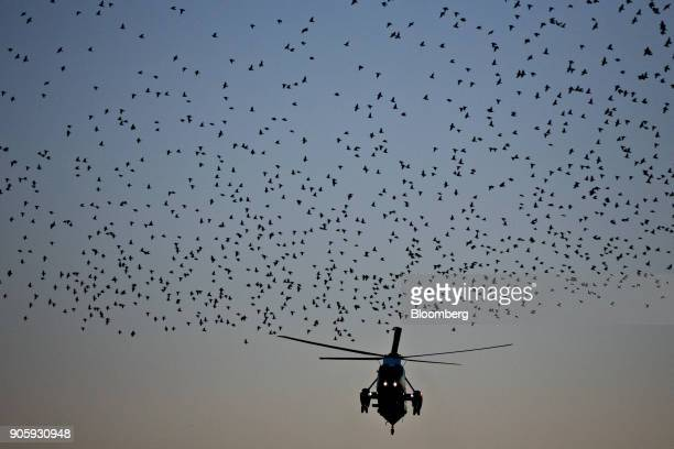 A flock of starling birds fly in front of Marine One with US President Donald Trump on board before landing on the South Lawn of the White House in...