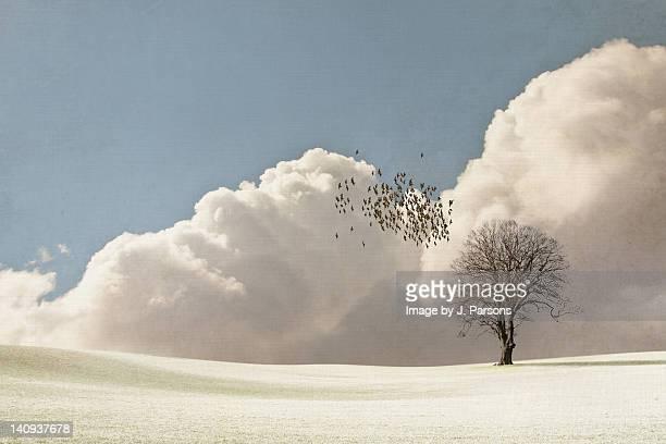 Flock of starlings flying