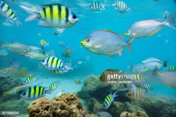 Flock of tropical fish.