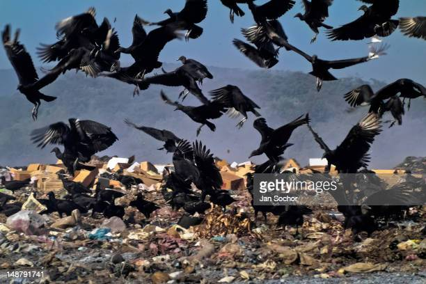 A flock of vultures flies over the garbage dump La Chureca on 10 November 2004 in Managua Nicaragua La Chureca is the biggest garbage dump in Central...