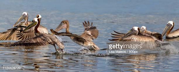 Flock Take Off
