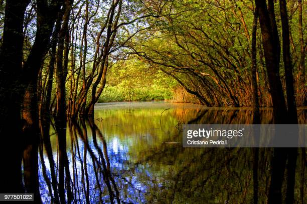 flodded fores - forens stock pictures, royalty-free photos & images