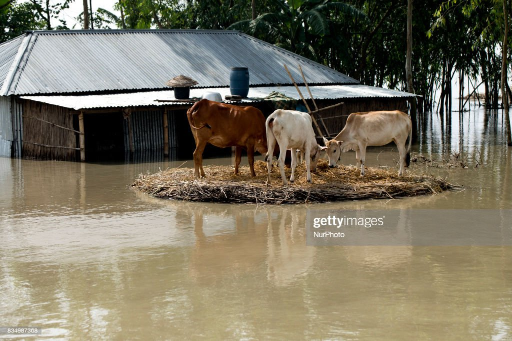 Flood affected area at Jamtola, Bogra, Bangladesh 17 August 2017. According to authorities, floods caused by heavy rainfall lashing Bangladesh during the past week have left at least 56 people dead. Affected people are waiting to get more relief as they are in shortage of food and drinking water in the shelter centers.